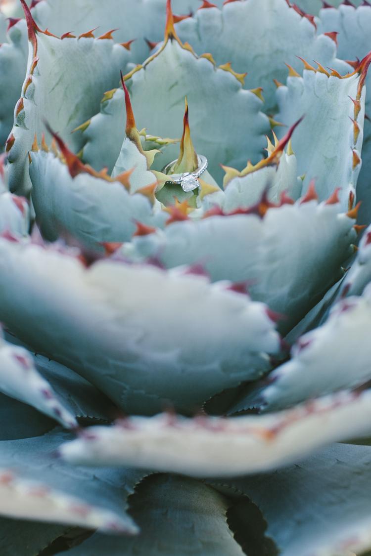 cactus__00