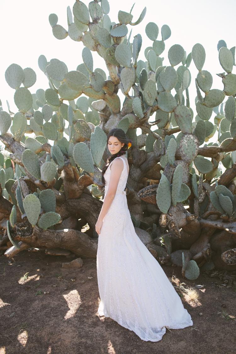 cactus__04