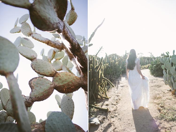 cactus__19