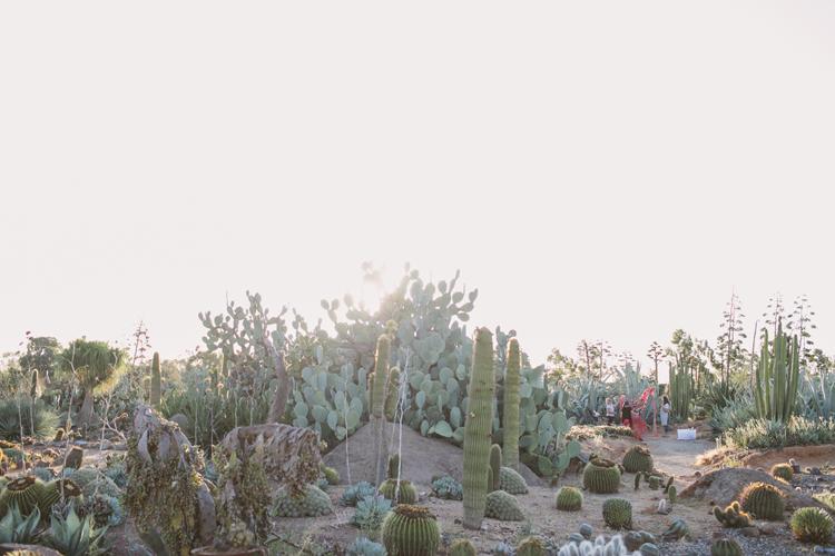 cactus__32
